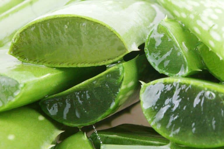 using aloe vera for different health benefits