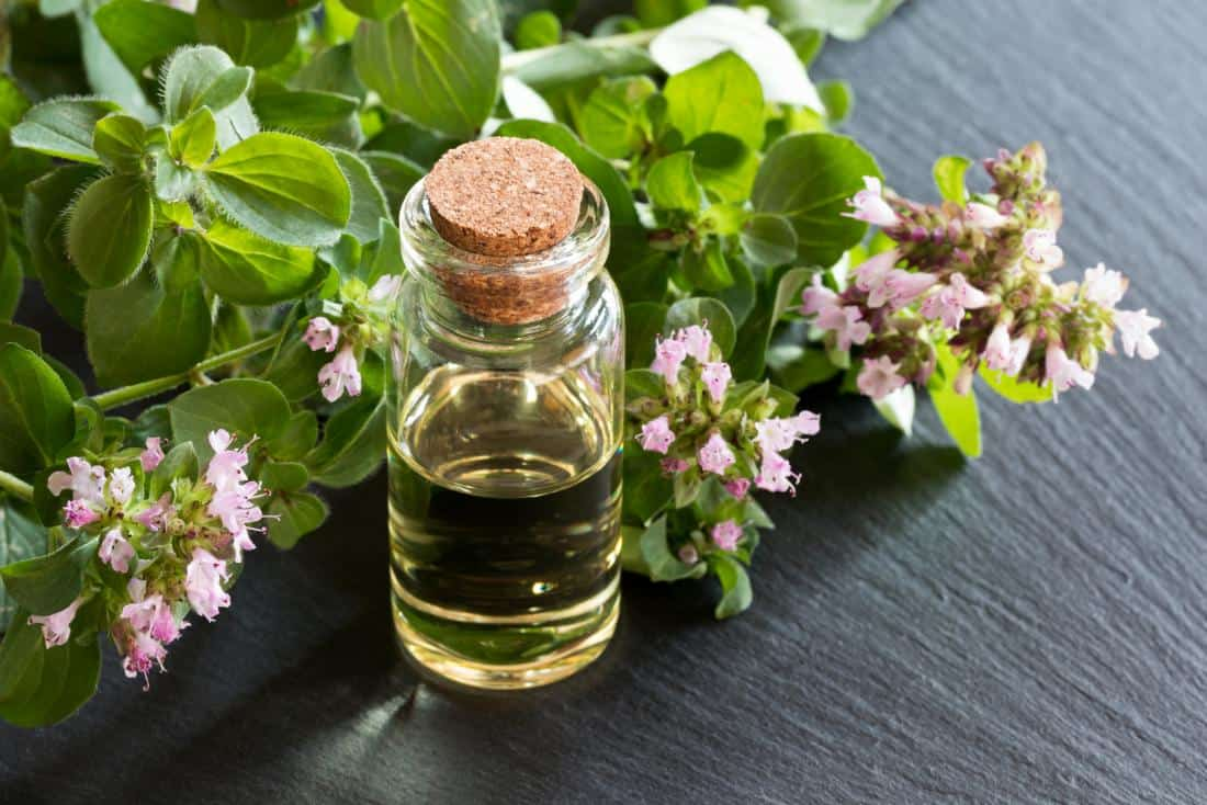 oregano oil benefits and uses