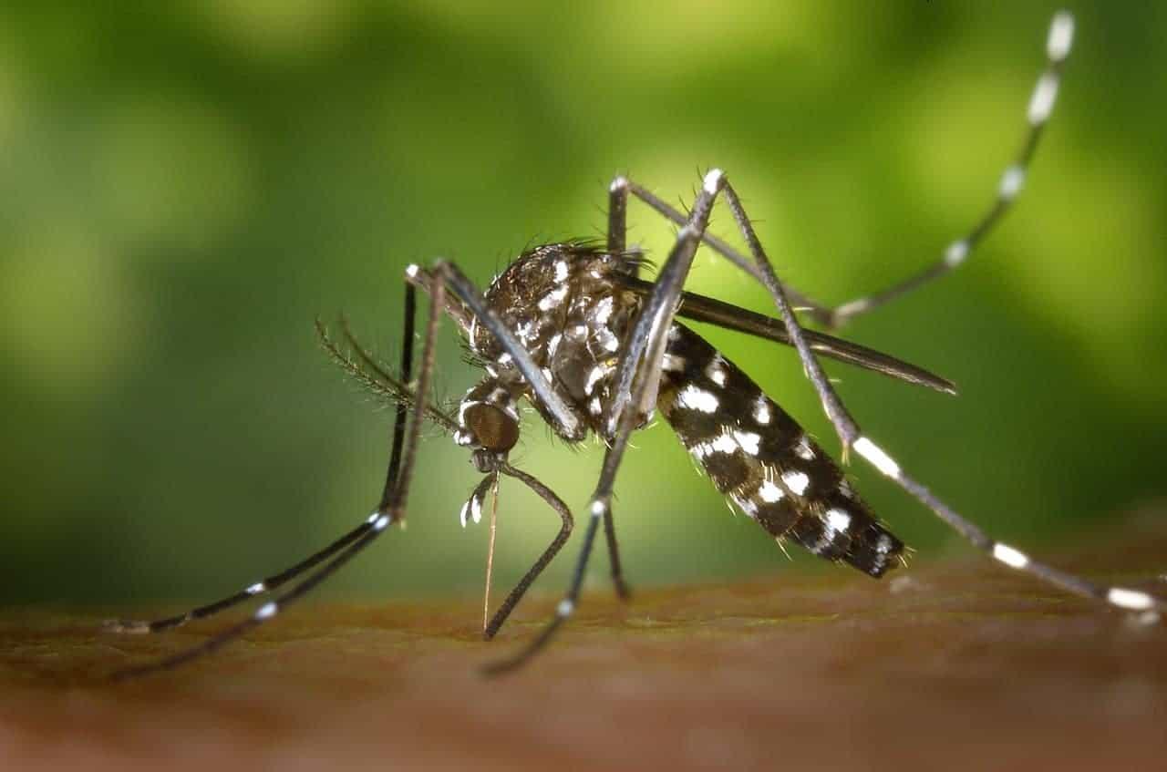 malaria series
